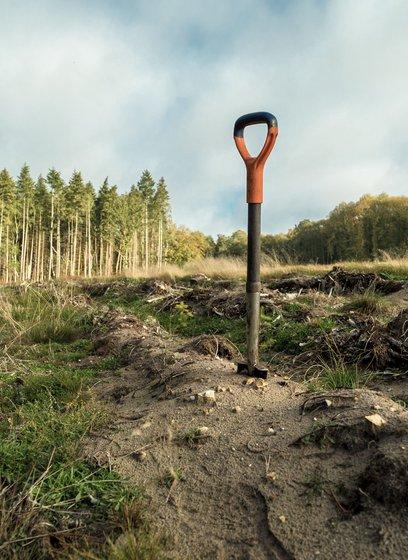 Planting UK trees image