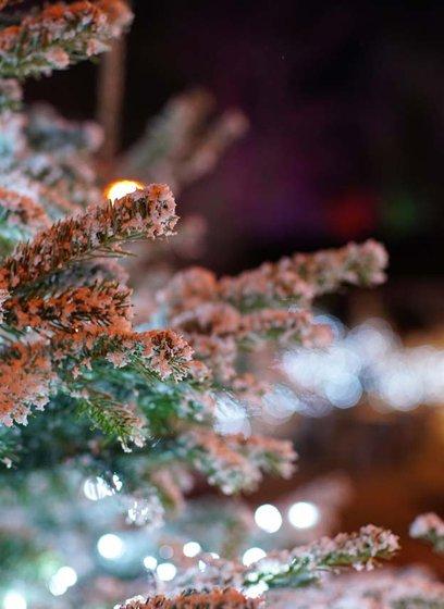 Festive breaks image